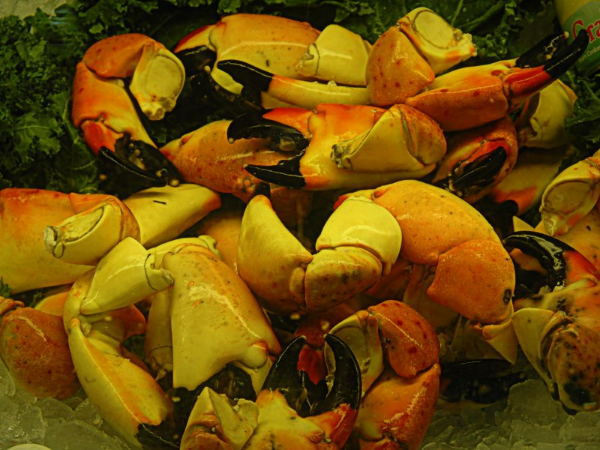 Fresh Local Florida Stone Crab Claws