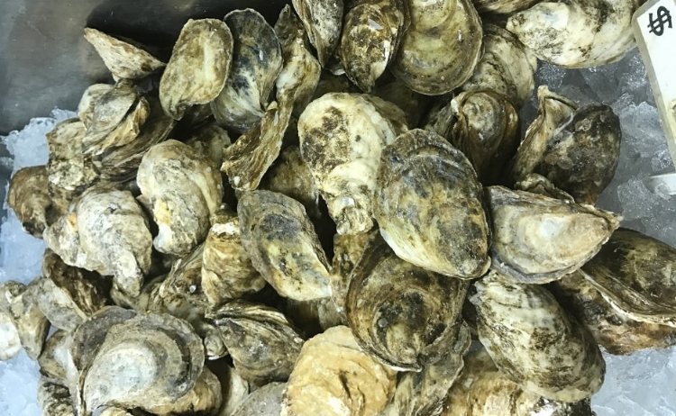 Savage_Blonde_Oysters_Seafood_Sarasota_Shellfish.JPG
