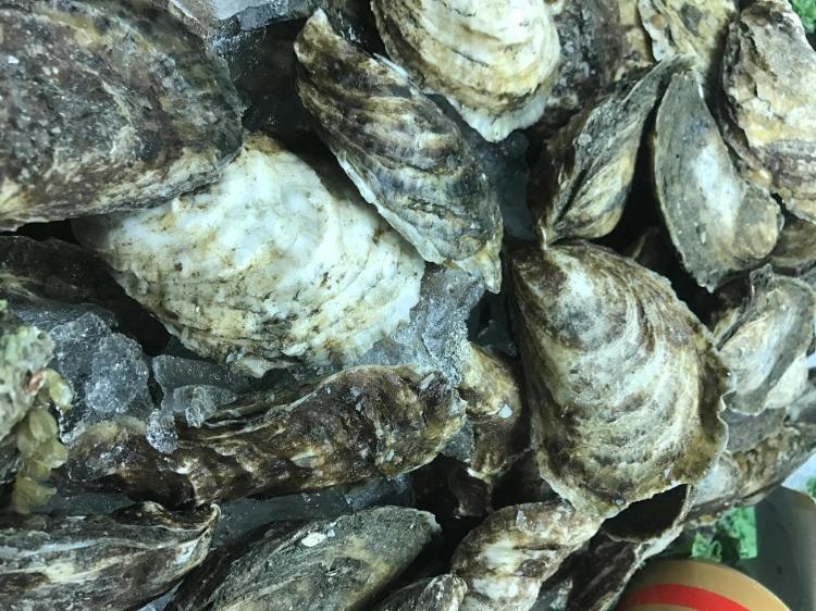 Onset_Oysters_Sarasota_Shellfish_Seafood.JPG