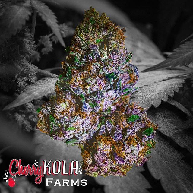 Black Cherry Kola 🍒💯🔥🥂🔥Hitting stores in August 2019 Thank-you to our team, and our followers we always appreciate the feedback, big things are on the way! #kuzzofly#killahpriest#vacationer#baytola#forbes#hightimes #theemeraldcup#beyourself#celebrity#kushstock #lifestyle#hollywood#zenweho #greenremedyrichmond #northstarsacramento #rcpsacramento #purplelotus #citycompasionatecaregivers #skunkmasters805 #zengardensacramento #baykountrykennels #kolakones #xtractology #pearlpharma #cherrykola #cherrykolafarms #sonomacounty