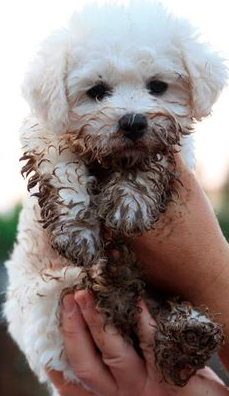 Lil pup. What a sweet little guy. A little mud never hurt anybody.