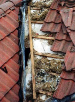 Birds, their droppings, and nesting materials can cause serious DAMAGE   !