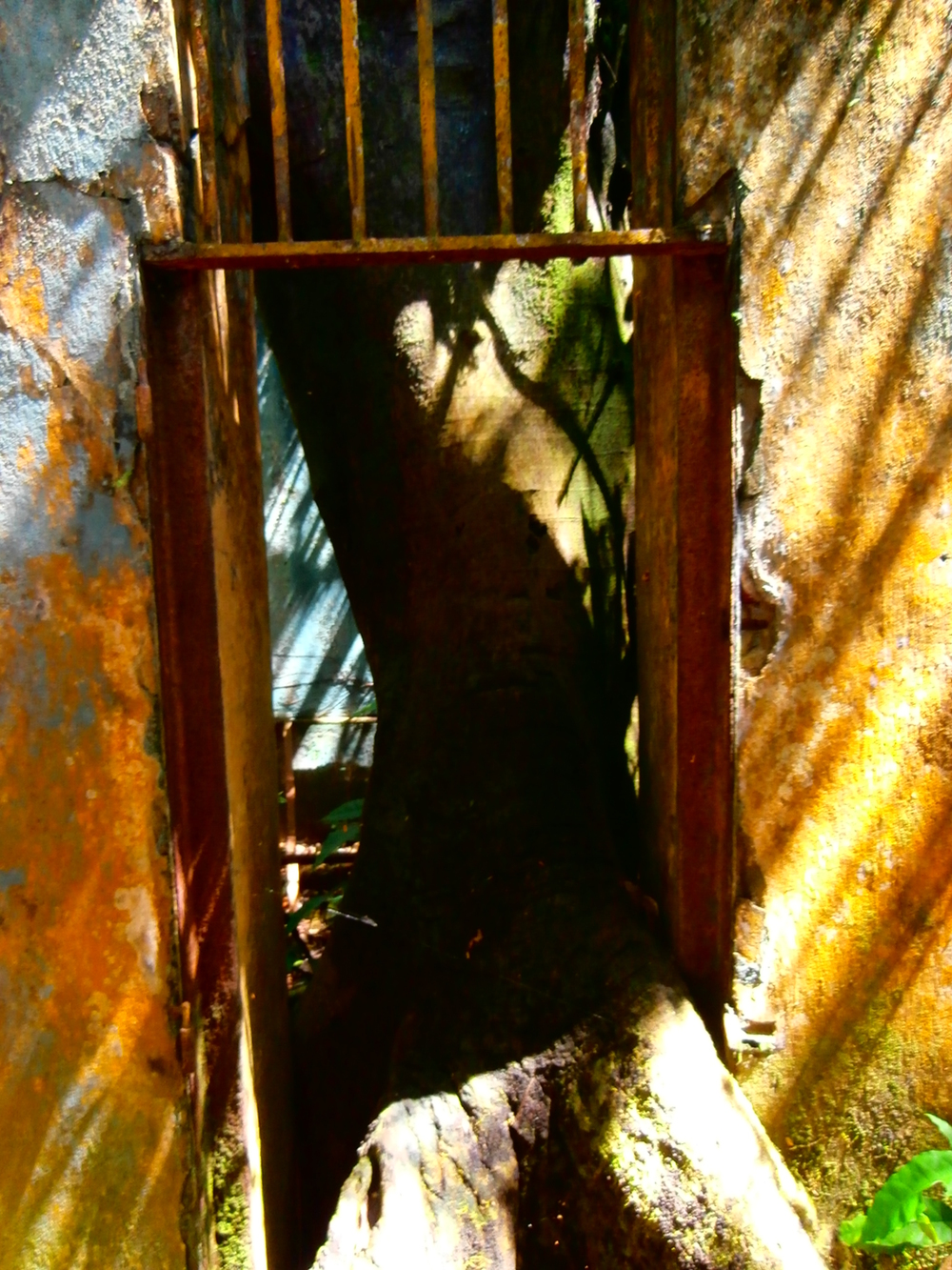 Papillon's Cell; reclaimed by a massive tree