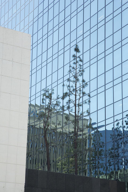 tree buildings.jpg