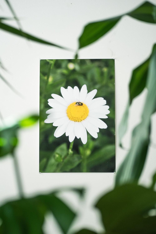 flower fly doc.jpg