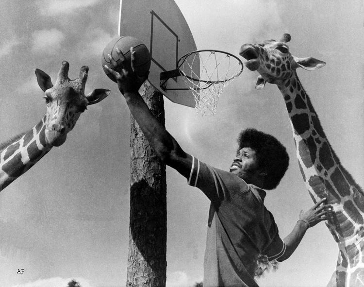 artis gilmore and the giraffes