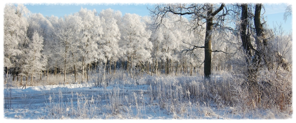 winterbomen1200x500.jpg