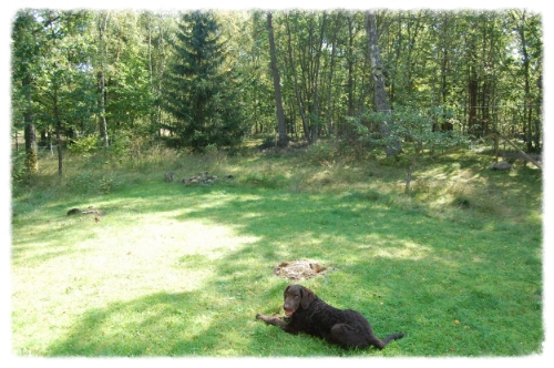 Hond in tuin.JPG