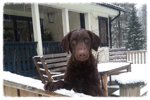 Sten in de sneeuw bij Lycka.jpg