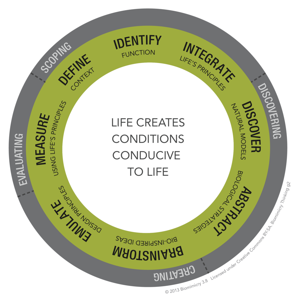 Biomimicry38_DesignLens_Diagram_Only_Biomimicry_Thinking_RGB.png