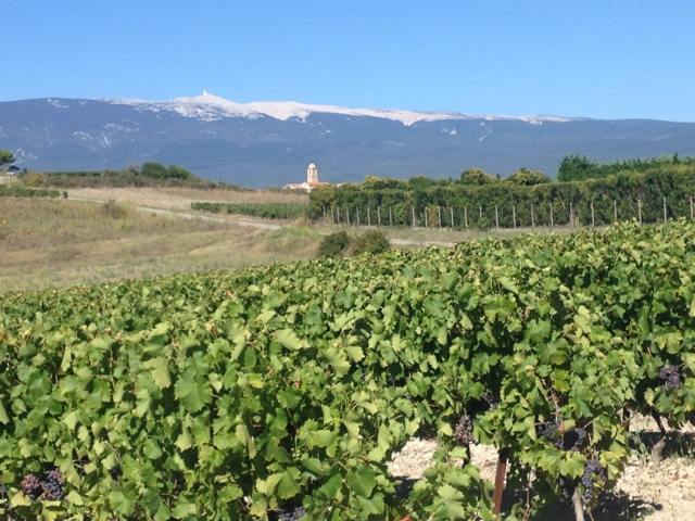 Vineyards and Ventoux