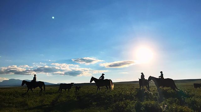 It's not everyday you get to ride into the sunset with a ranching family on the Rocky Mountain Front of Montana. I'm grateful for the places filmmaking takes me but more so the people I get to meet. It's a bit surreal at times. This is one of those times. #familiesthatridetogetherstaytogether #ranchfamily #ranchlife #bornwild #filmmaking #storytelling #canonc300