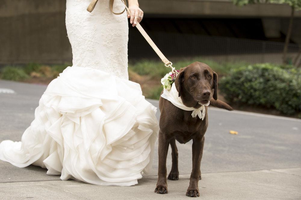 Dog RINGBEARER- A Romantic Sodo Park Seattle Wedding - Kimberly Kay Photography