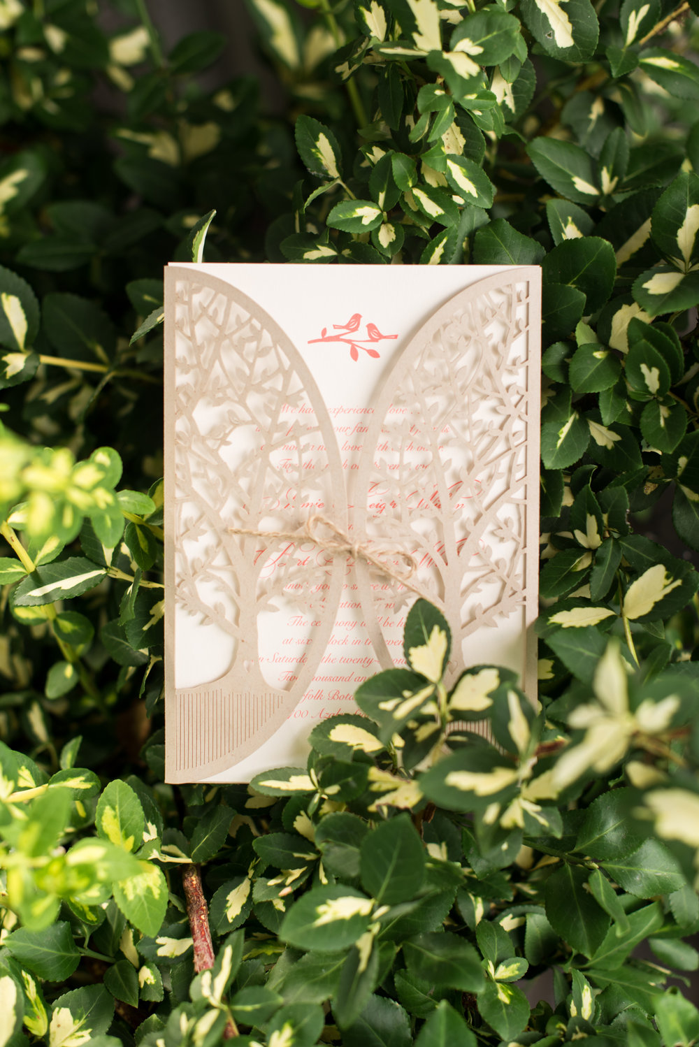 Norfolk Botanical Butterfly Garden Wedding - Virginia Beach Outdoor Wedding Venue -- Wedding Blog - The Overwhelmed Bride