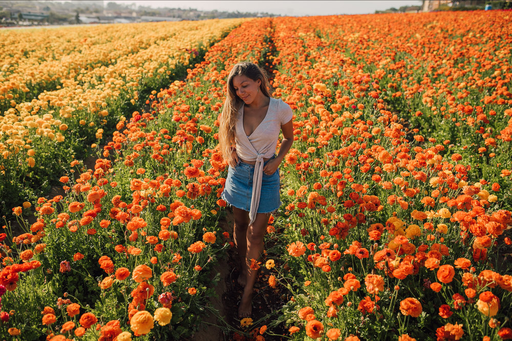 FlowerFields-29.jpg