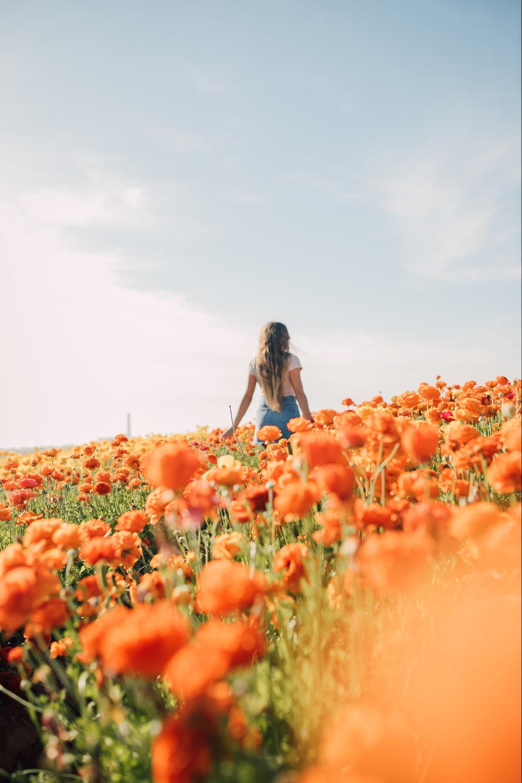 FlowerFields-35.jpg