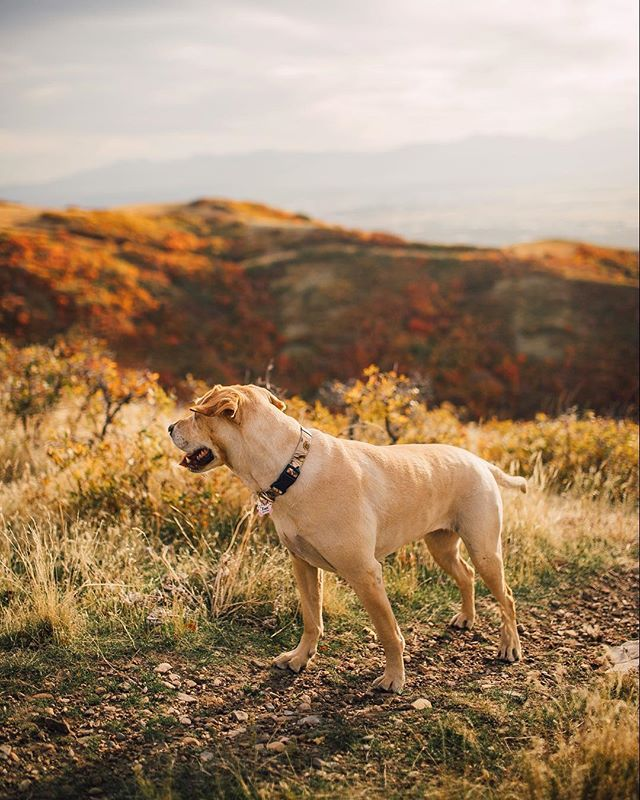 Take me with you on your next adventure with you pup!! Your love for the outdoors and for your pet needs to documented. 😍🍃 #lifewithpets