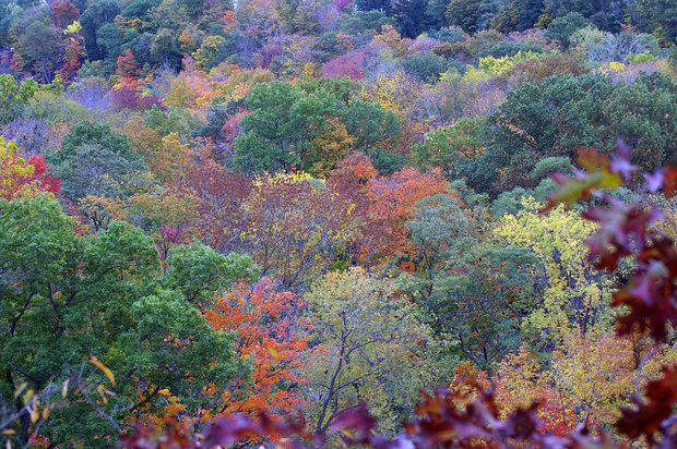 Trees in autumn in the Cleveland Metroparks  (Joanne Berger DuMound/Sun News )