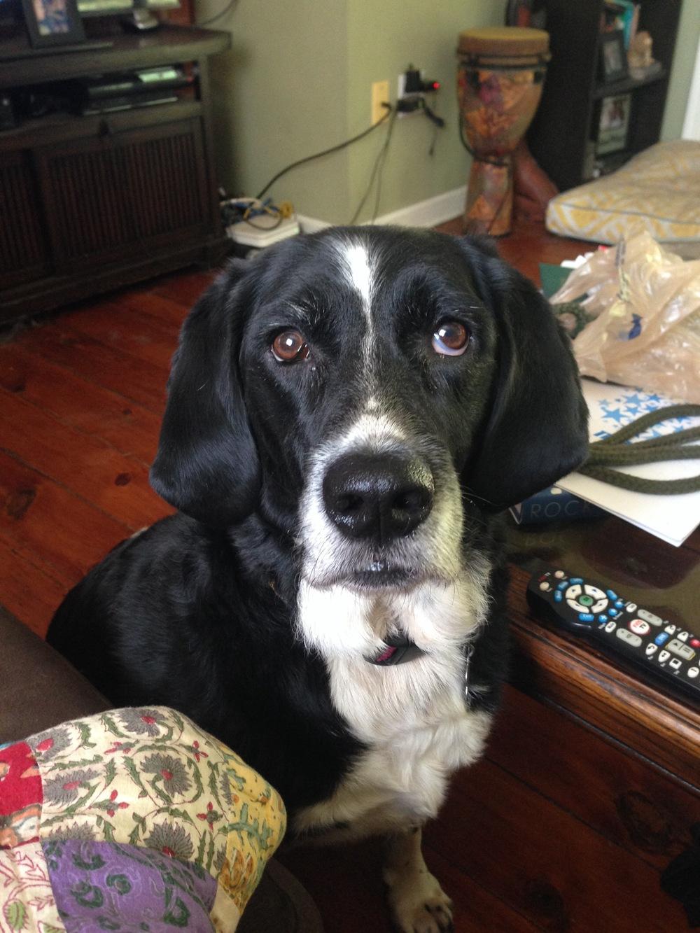 Our dog Kaelan.