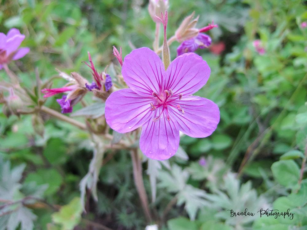 Brandau Photography - Flower