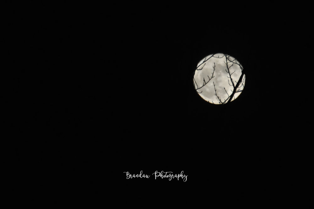 Brandau Photography - Full Moon and Branches - Iowa