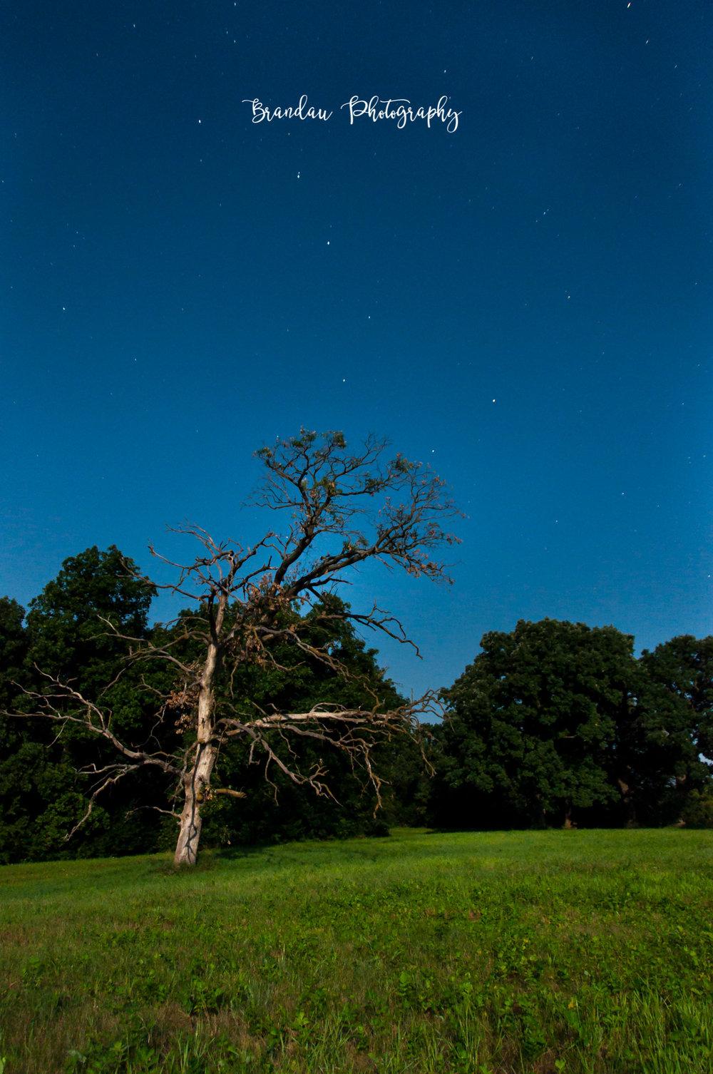 Brandau Photography - Big Dipper - North Star - Old Tree - Iowa