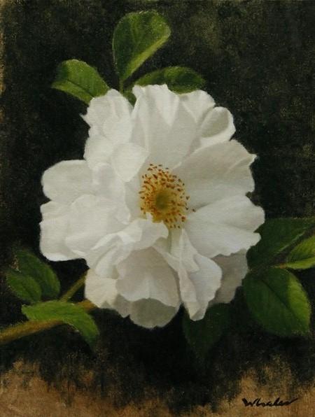 Study of White Rose II