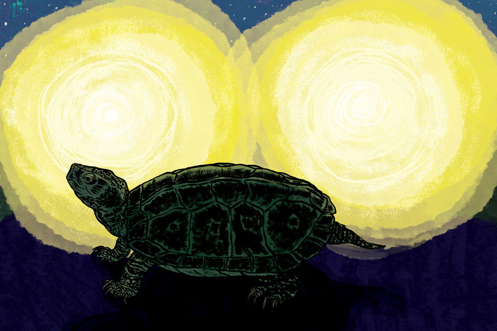 Eulogy to Vermont Snapping Turtles  |  SEVEN DAYS   The author wrote an essay on how we should live with animals opposed to being superior to them. How we should accept that they live among us opposed feeling entitled and not giving a damn if they live or die.   Click here to read the essay…   Art Direction: Brooke Bousquet