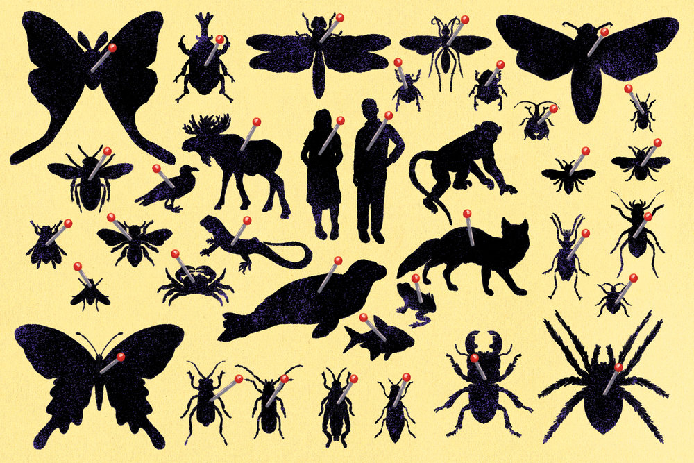 Washpost_OpEd_InsectApoc_V2_C_01.jpg