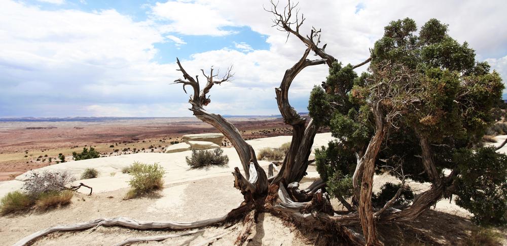 TreePhoto1.jpg