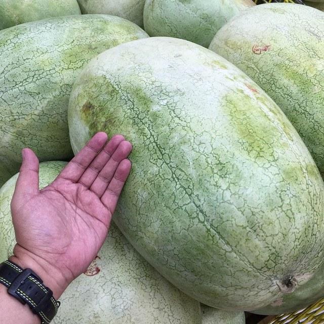 Jurrasic Melons
