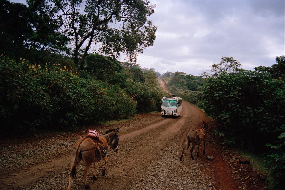 donkey 8x12srbg.jpg