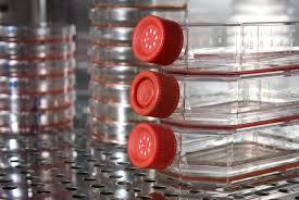 flask pic incubator 1.jpeg