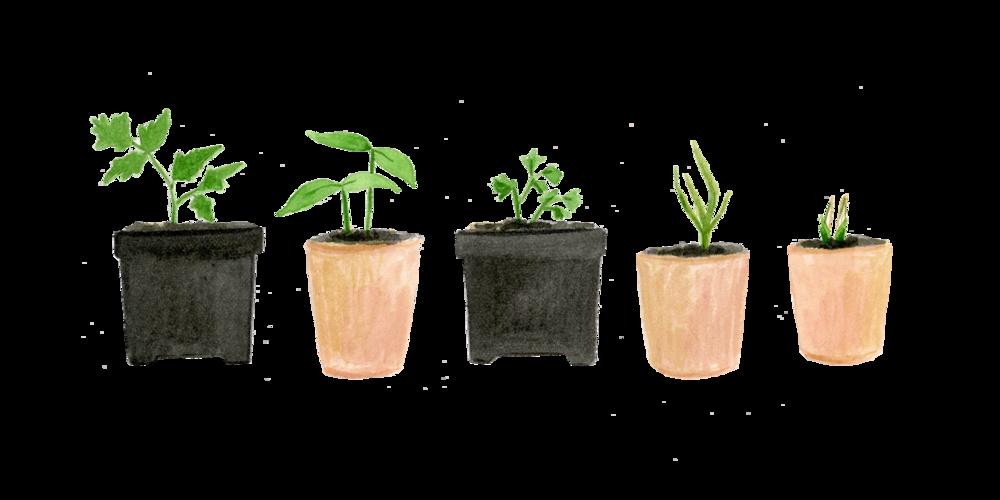 choose-plants_web.png