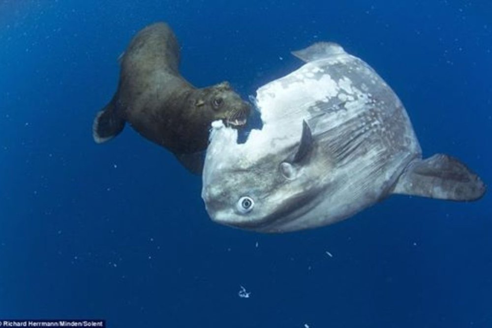 ocean-sunfish-are-the-most-useless-animal-an-epic-rant-1200x800_c.jpg