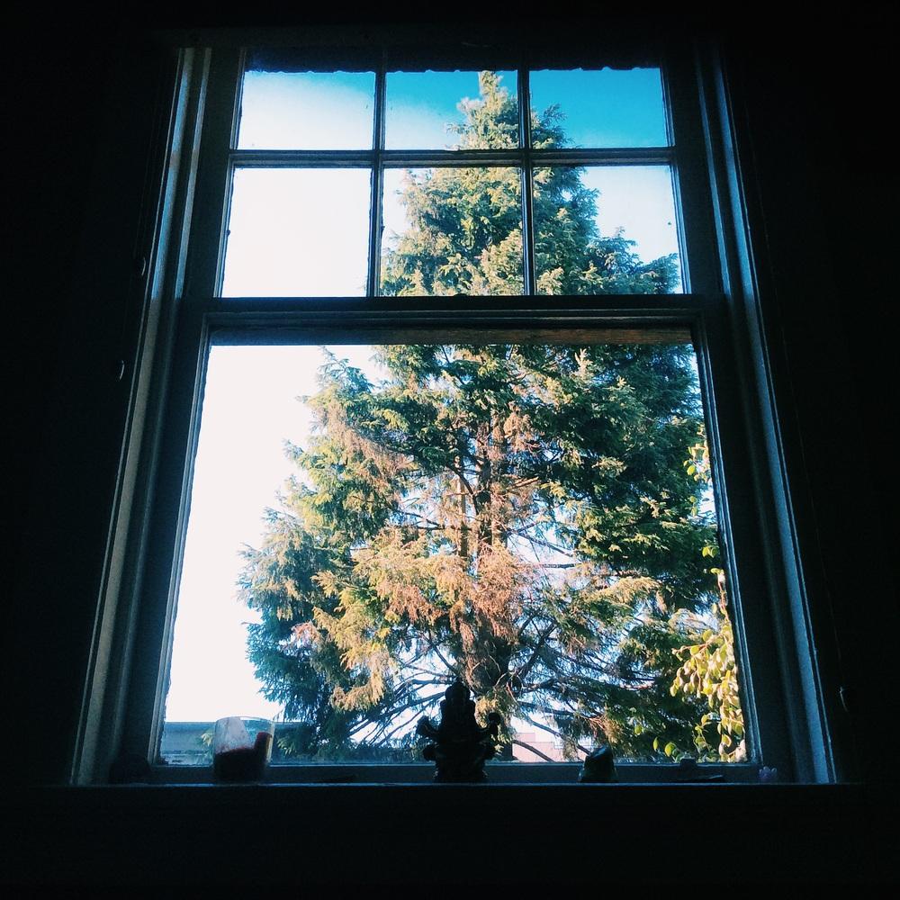ベットから見える大きな木、わたしのお気に入り。