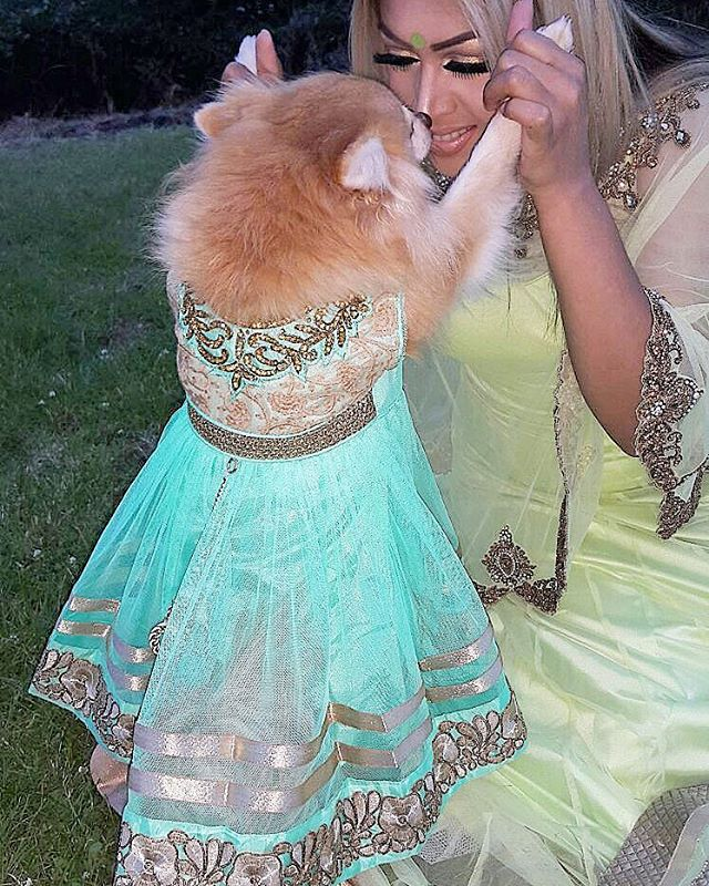 It's amazing how much love and laughter dogs can bring into our lives, some things just fill our hearts without trying. My Honey wearing her Indian desi outfit, how cute does she look? 🐾👌🐶🐕💚 #puppielove #puppiesmile #dogslife #honey #family #mylife #mypuppy #mybaby #puppypaw #dog #pomeranian #spitz #redlips #cream #intadog #instapuppie #indian #desi #salwarkameez #aqua #style #embellishment #treadwork #fashion #crystals #swarovski #jewel #doggiefashionista