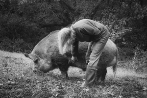 Harmony Herd Wild Boar
