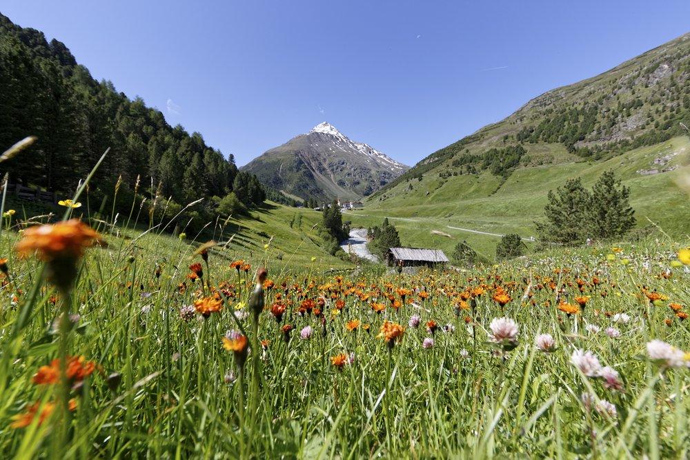 Ötztal_Chalet_Tirol_Blumenwiese_Vent.jpg