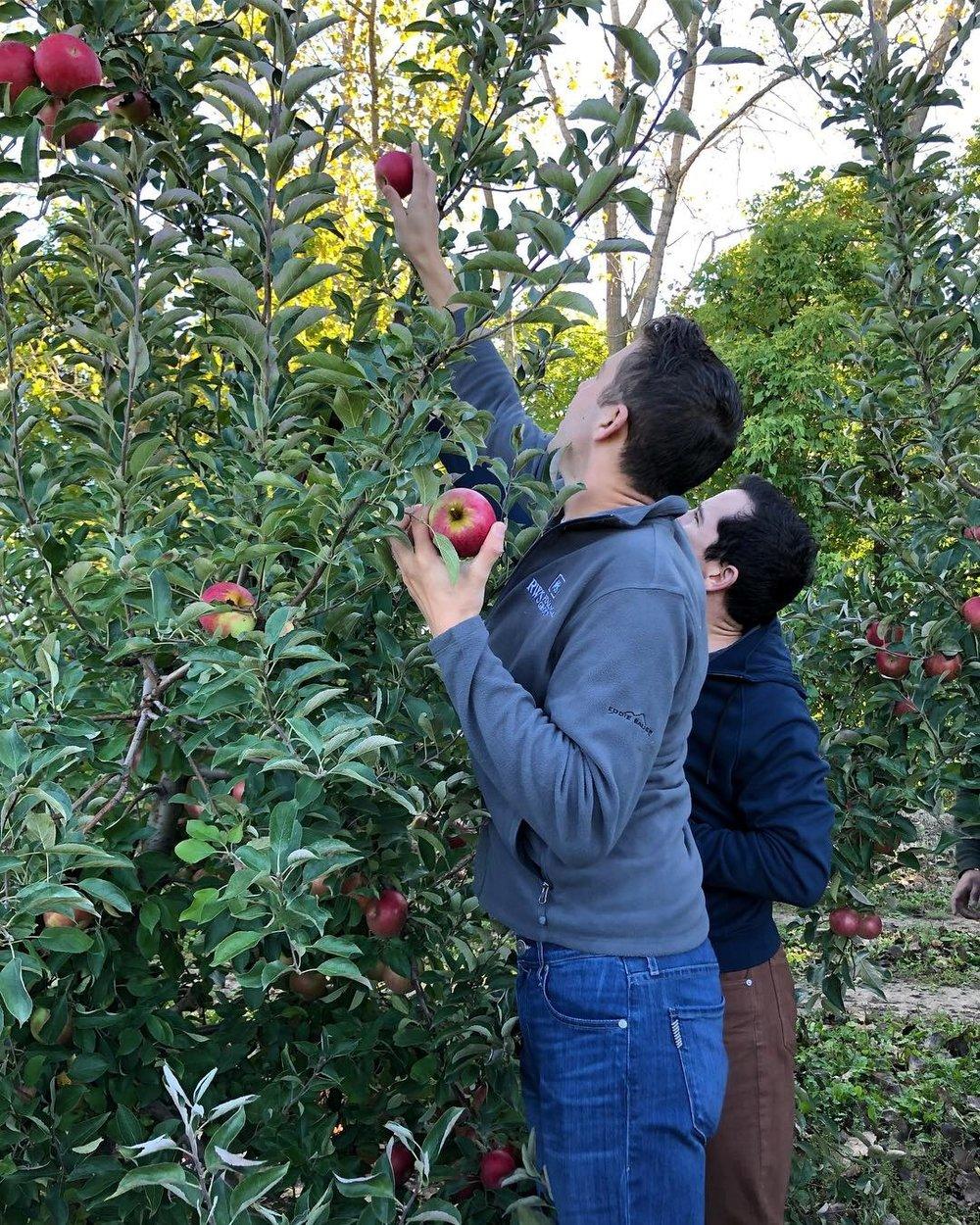 picking apples.jpg