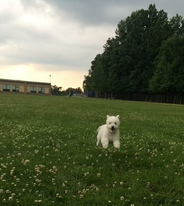 Dog sitting at the park