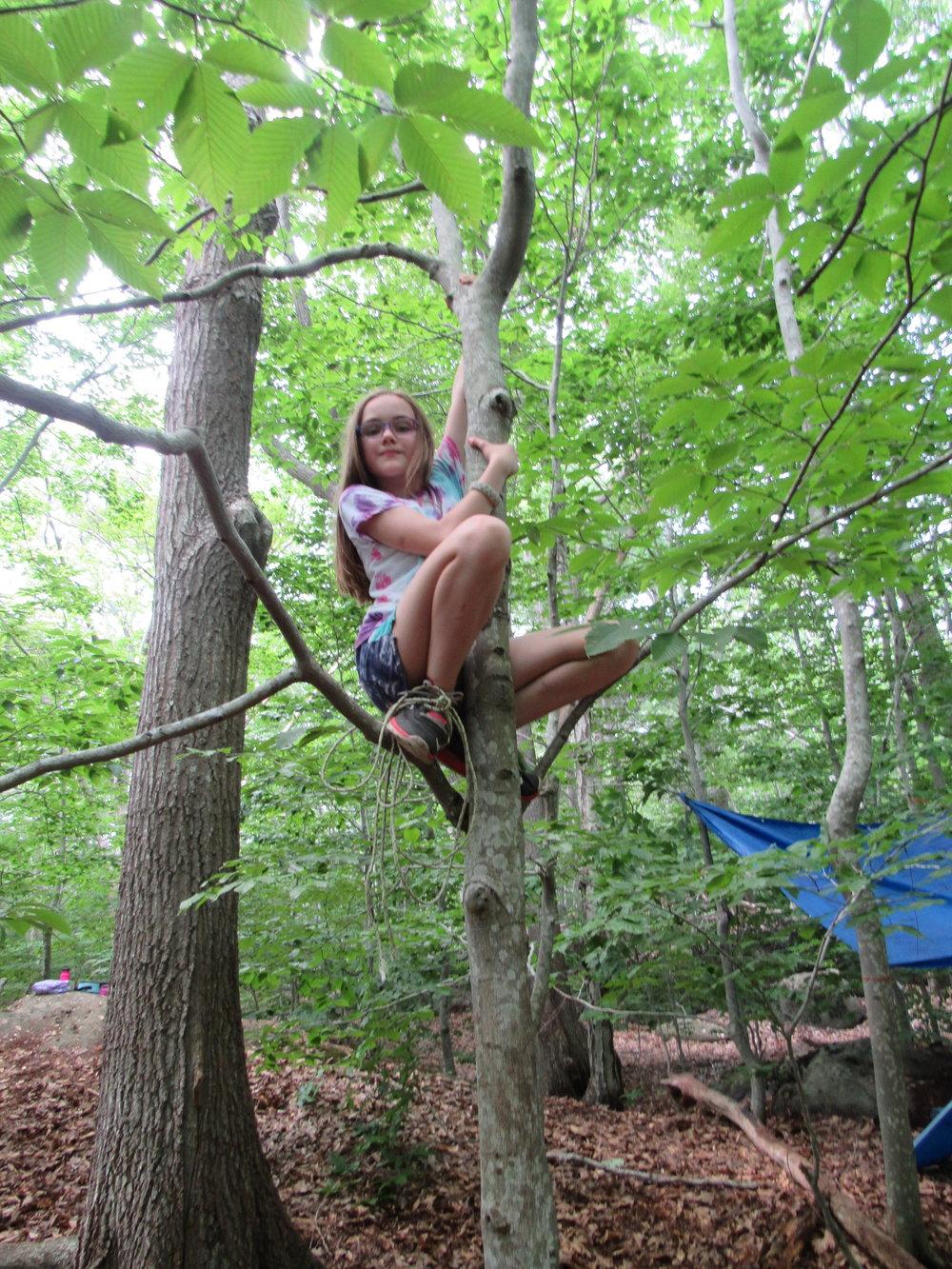 Aine in tree.JPG