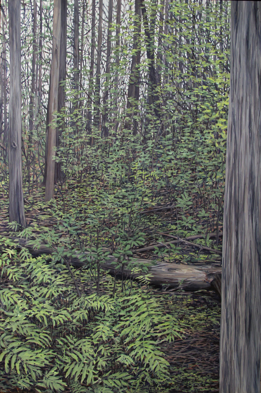 Passage: Cedar Swamp Trail, 2015 (SOLD)
