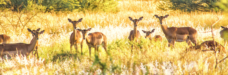 Herd of Impala  |    ©   Photography by Marthinus Duckitt