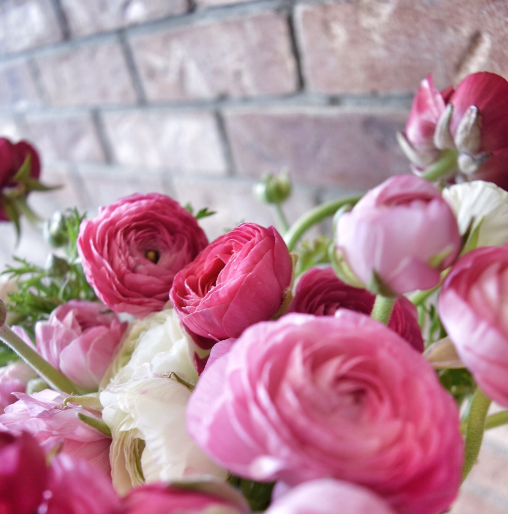 Pink Ranunculus in my entry way - I love the way that the pink pops against the brick!