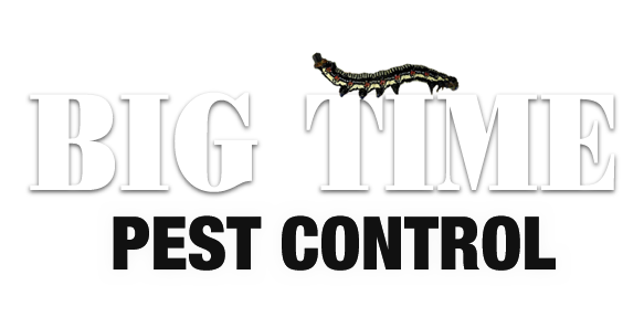 Big Time Pest Control