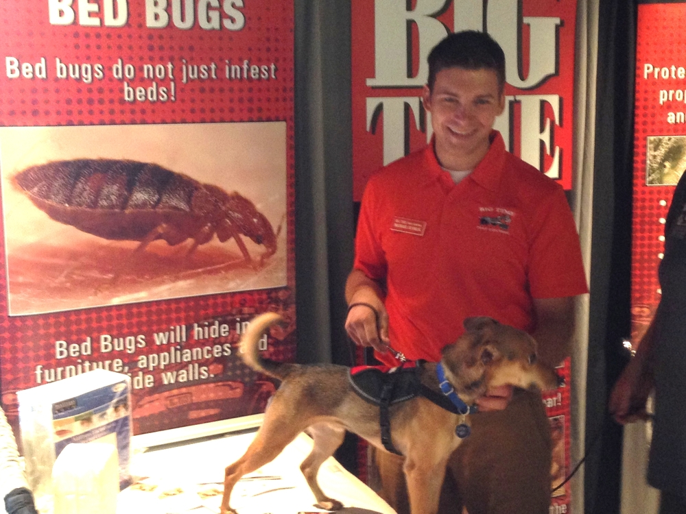 Big Time Pest Control Anderson Ca Exterminator