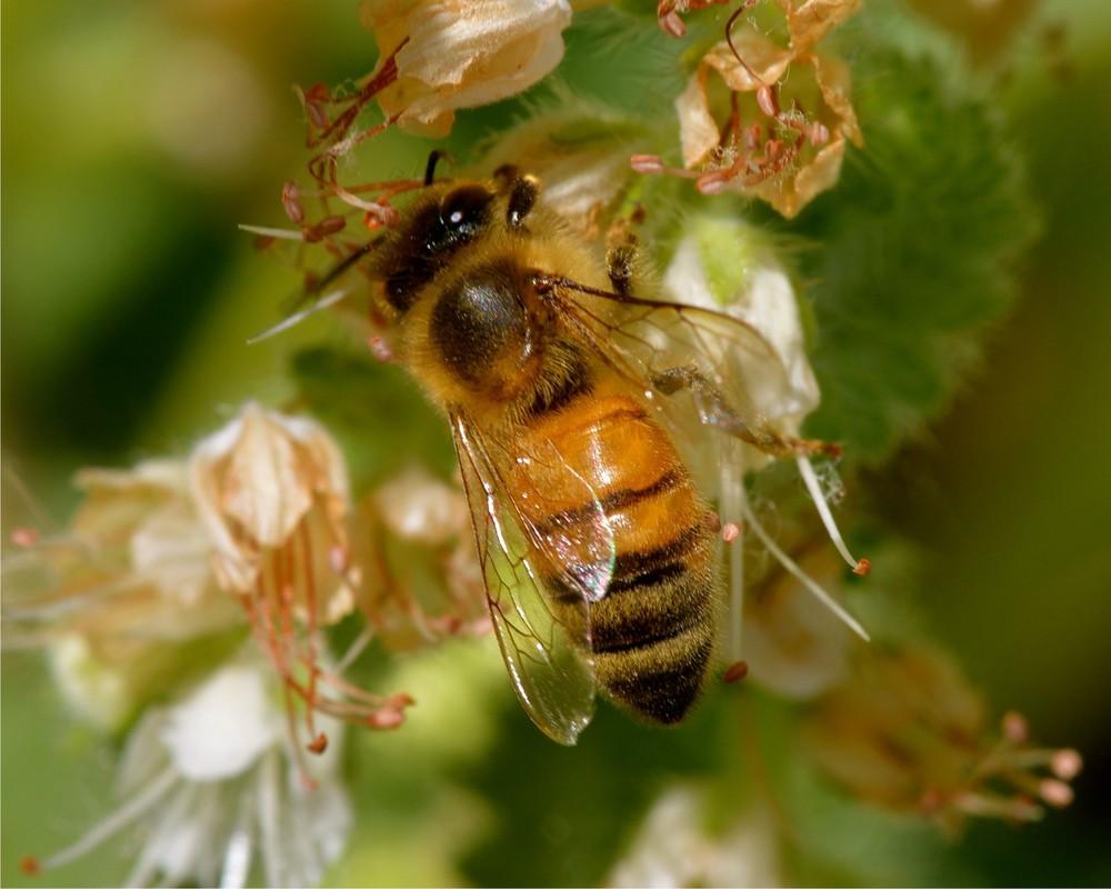 Large Bee.jpg