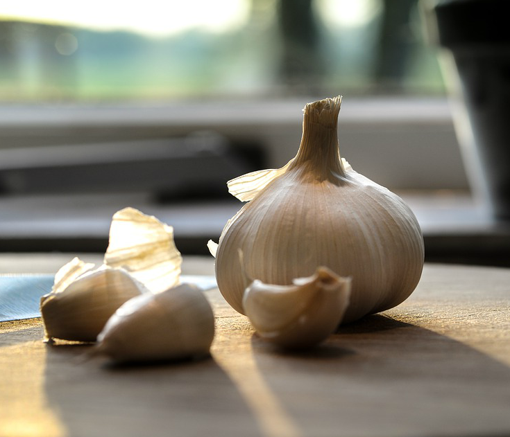 garlic for pests