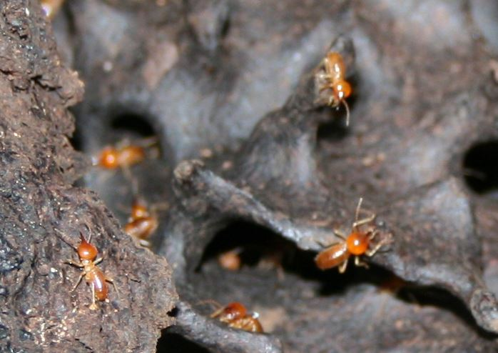 termites crawling on a mound